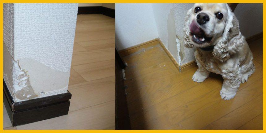 ペットによる壁破損修理