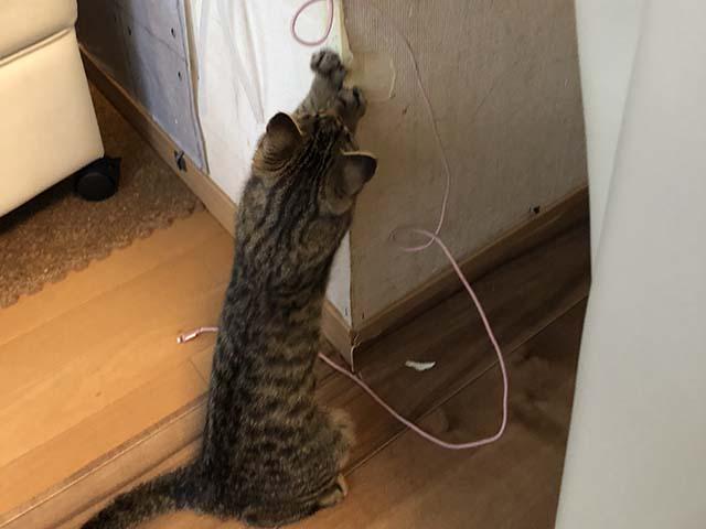 猫がコーナーを爪研ぎにしている姿